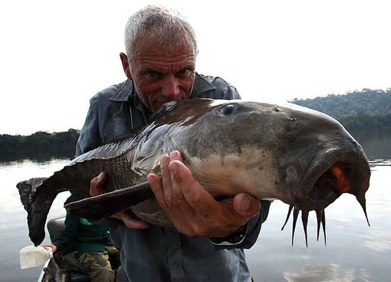 15. Похожий на какую-то доисторическую рыбу сом из реки Ориноко, известный в этих местах под названием кую-кую. Он может достигать метра в длину и 18 кг веса. В задней части тела рыбы есть отростки, поддерживающие хвостовой плавник, из-за чего она и похожа на рыбу-броненосца из другой эпохи.
