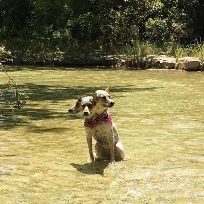 5. Кажется, этот пёс охраняет Философский камень