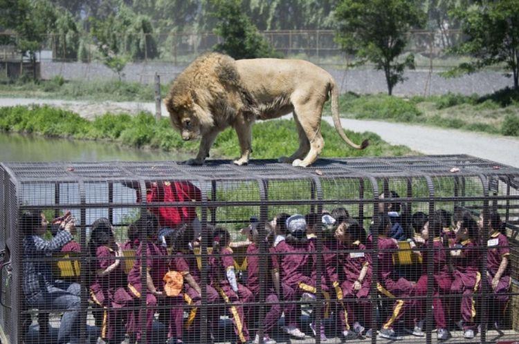 В чилийском зоопарке все наоборот: люди — в клетке, животные — на свободе