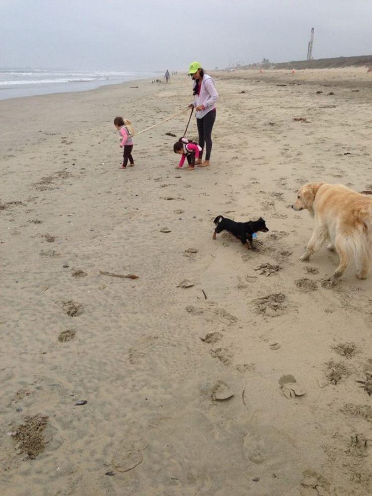 Собаки на свободе, дети на поводке — что-то явно пошло не так