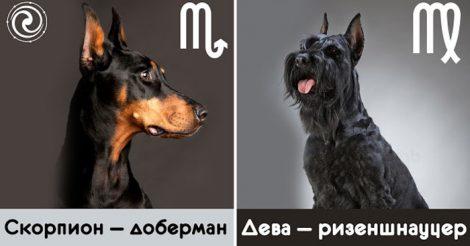 какая вы собака