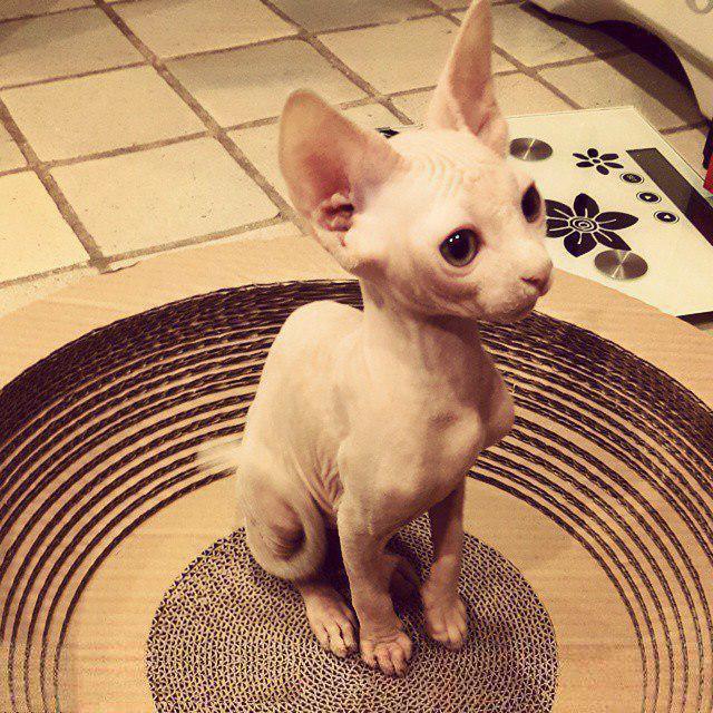 2. Он так же прекрасен, как и все коты