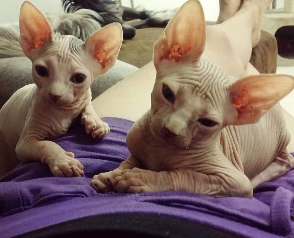 11. Он, как и все коты, скептически смотрит на всю человеческую деятельность