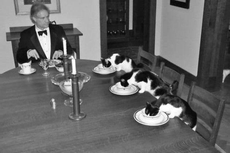 «Мне стало скучно, когда жена уехала в командировку. Поэтому я устроил ужин для себя и наших котов»