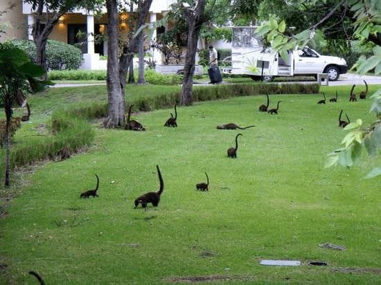 5. Лемуры в парке выглядят как маленькие диплодоки