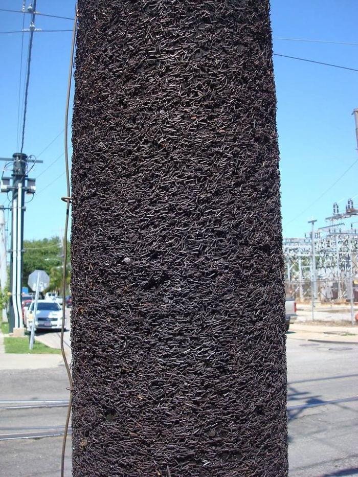 Скобы на столбе, которыми крепили афиши 40 лет подряд