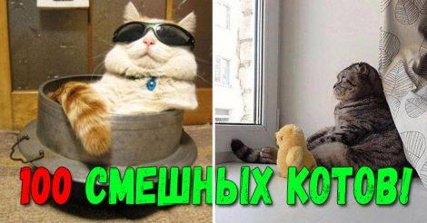 смешных фото кошек