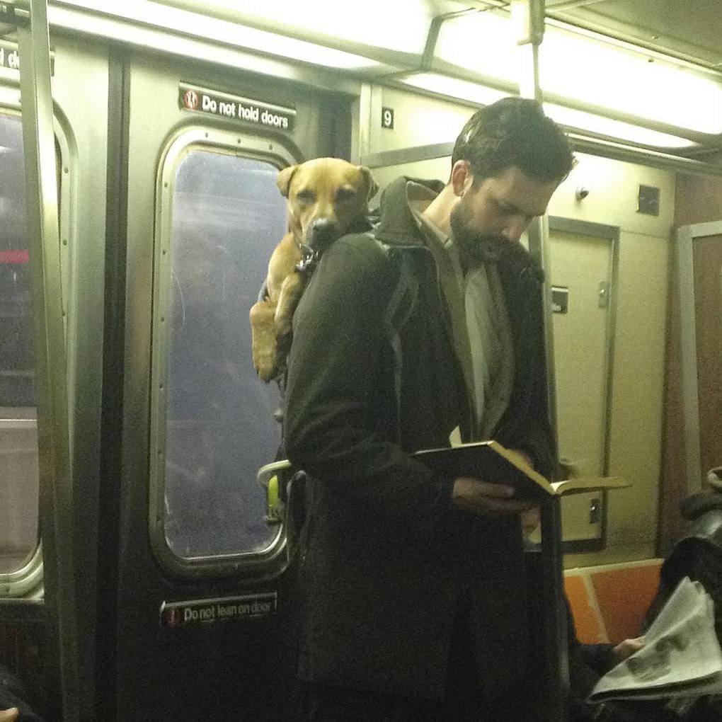 «Вау… кому не понравится мужчина, читающий книгу, пока несёт за плечами своего лучшего друга. Единственное, что вызывает сомнения — так ли крепок их союз. Я бы с радостью поборолась за место в постели рядом с ним. По крайней мере, от меня будет меньше храпа»