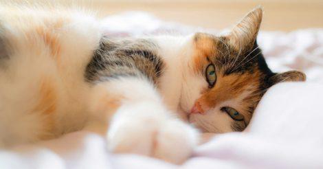 Кодекс настоящего кота