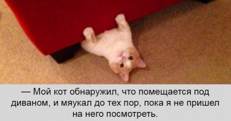 коты идеальны