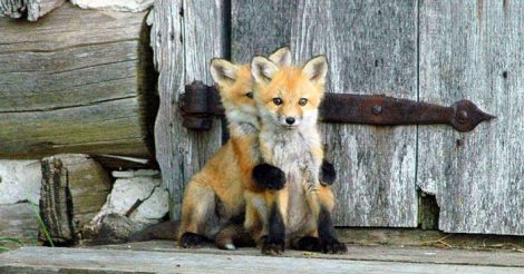 красивых животных