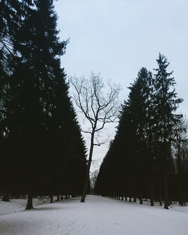 11. Дерево против системы