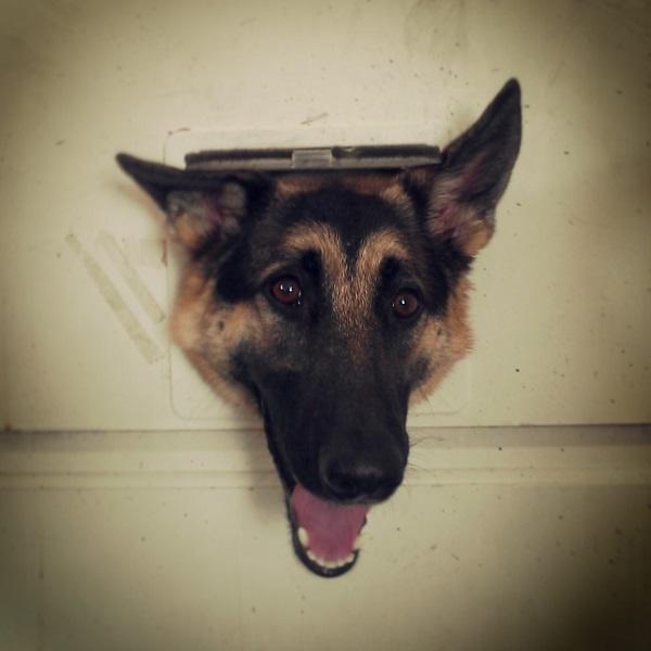 6. Они — уличные собаки, не хотят быть в доме.