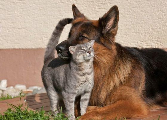 9. А как они ведут себя с кошками!.. Ужас!..
