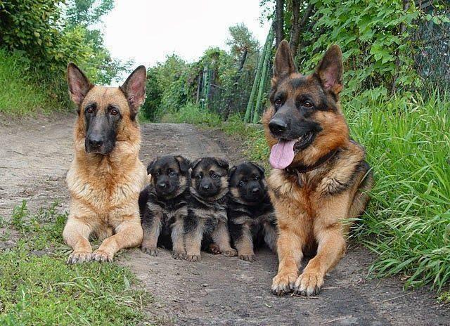 10. Они не понимают, что такое семья.