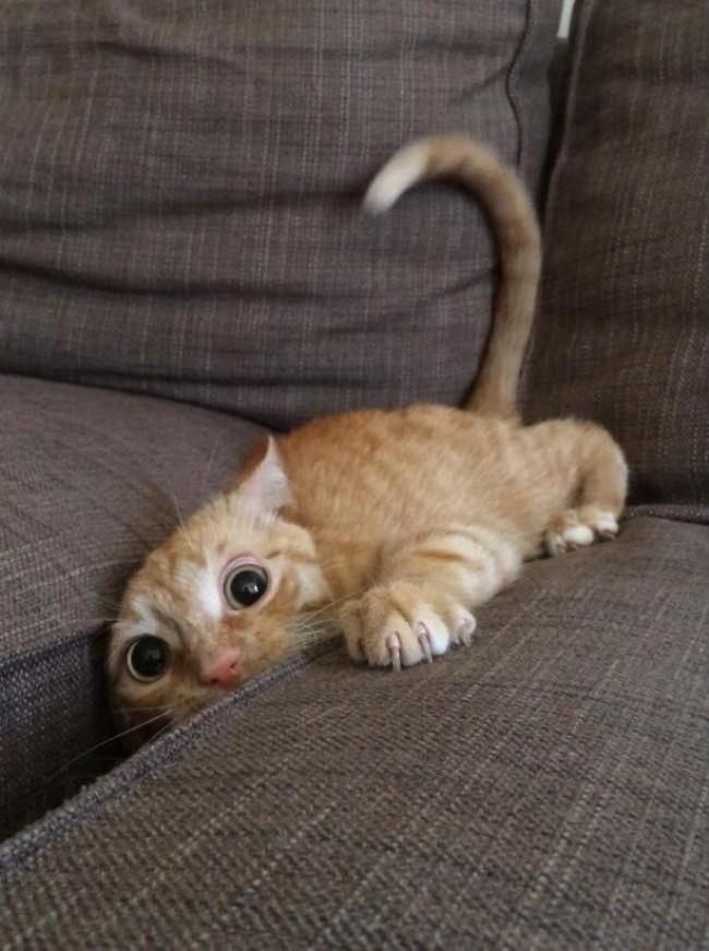 2. Научись зарываться в диван. Так можно решить практически любую проблему.