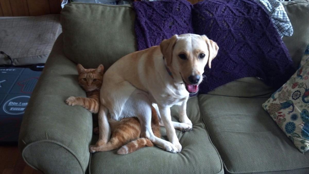 9. Не расстраивайся и не отвечай агрессией, если пес тебя как бы «не замечает».