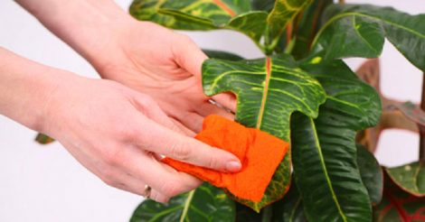 Аура растений