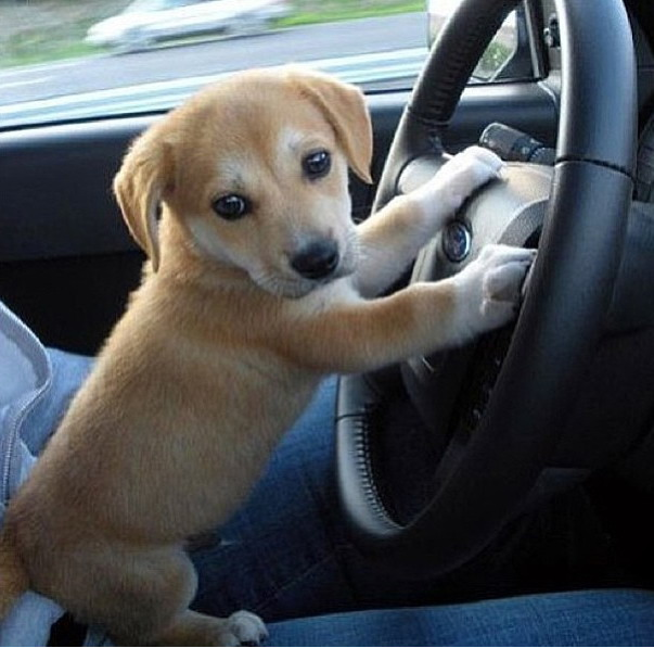 Вот подрасту и сам водить буду!