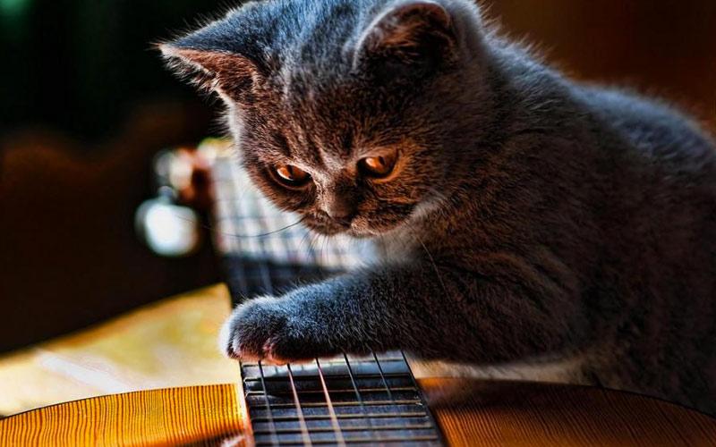 8. Настроит любимую гитару.