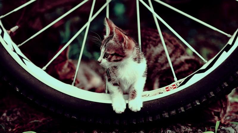 9. Проверит давление в шинах вашего байка.
