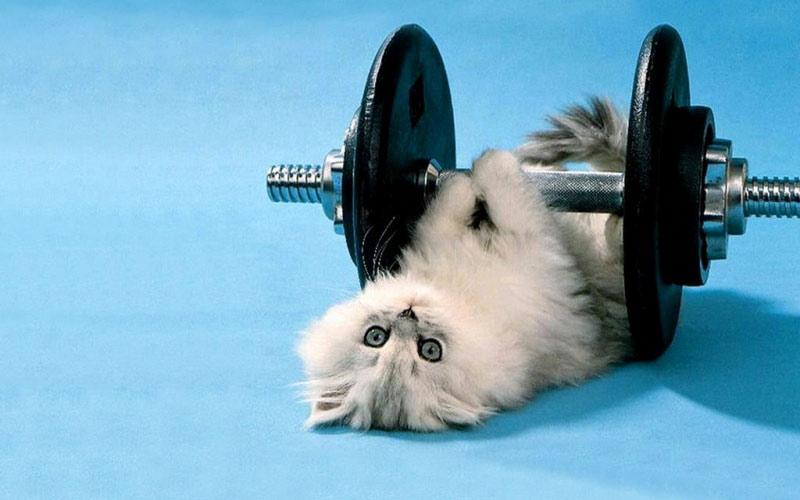 18. Займется с вами фитнесом.