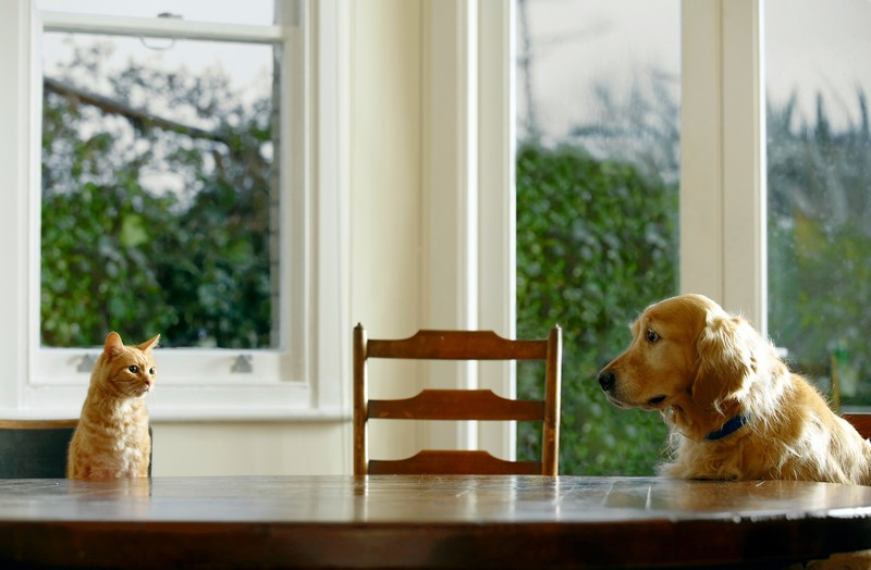 20. Научит вашего пса вести себя за столом.