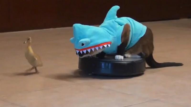 27. Укротит робот-пылесос, нарядившись в костюм акулы (все коты делают это!).