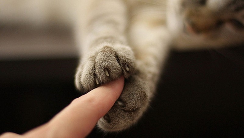 30. И всегда пожмет вам руку.