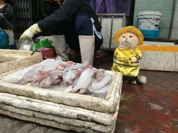 Самый милый продавец рыбы на вьетнамском рынке