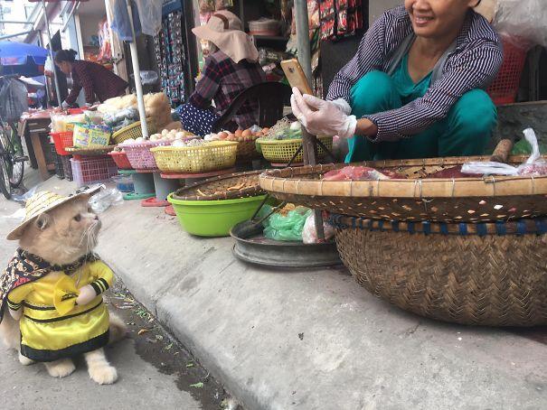 Кот Чо покоряет сердца не только покупателей, но и конкурентов