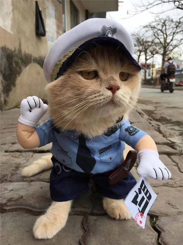 «Откройте, полиция милоты»