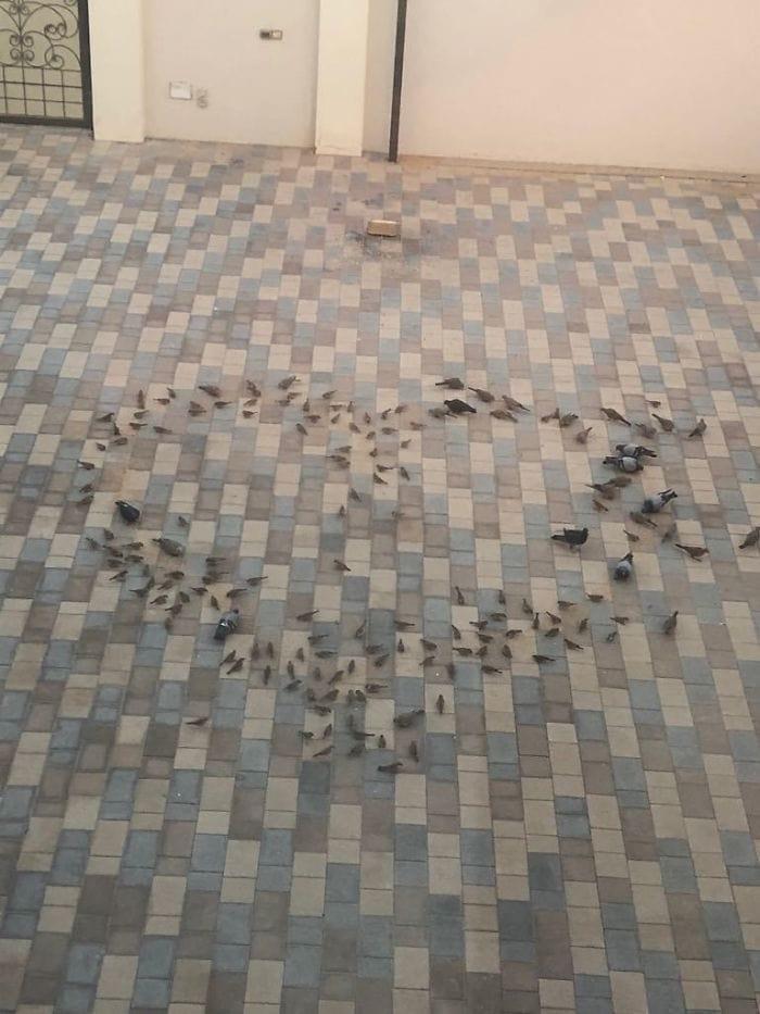 3. Каждое утро мой отец кормит птичек, чтобы мама с утра могла ими полюбоваться