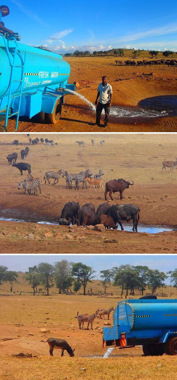 4. В Кении мужчина возит воду животным, которые страдают от засухи