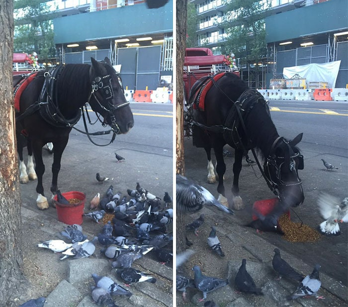 7. Лошадка опрокинула ведро со своей едой, чтобы голуби тоже могли покушать