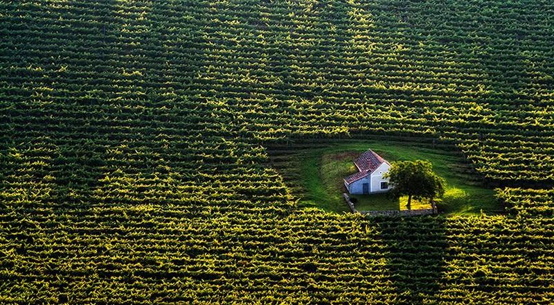 Домик в поле. Венгрия.