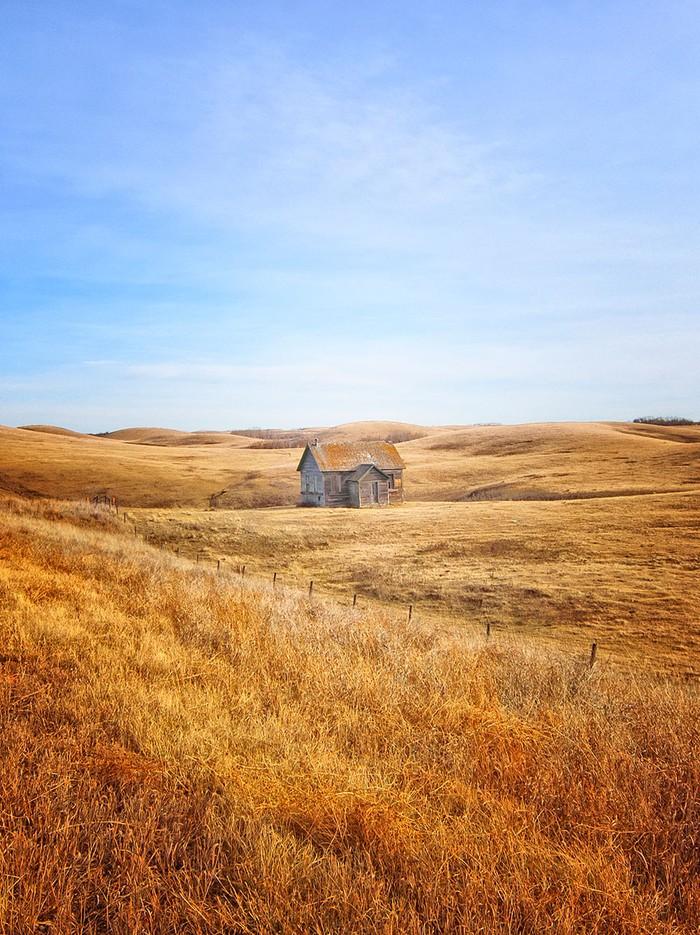 Дом в золотистом поле. Альберта. Канада.