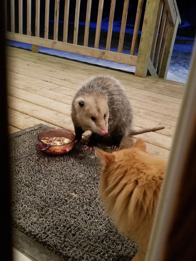«Извините, но это мой ужин!»
