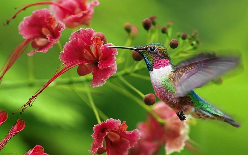 1. Колибри — единственная птица, которая умеет летать задом наперед.