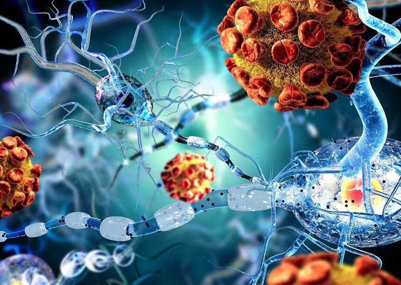 2. Бактерии, что живут в твоем организме, при наличии благоприятной среды могут увеличивать количество клеток, из которых состоят, в 10 раз.