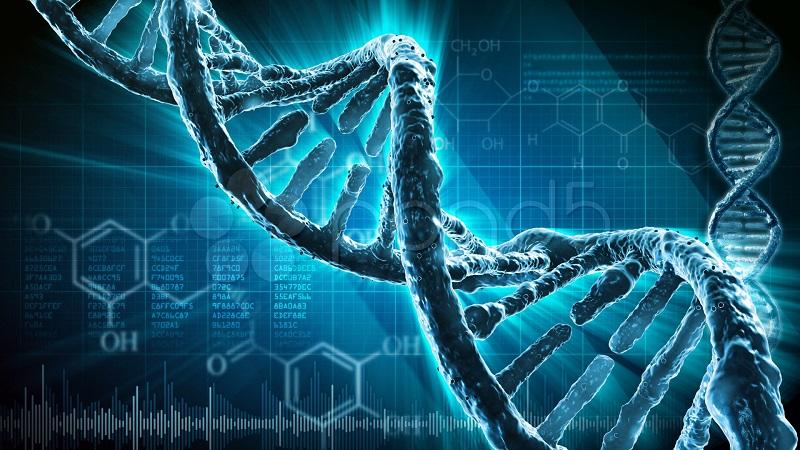 8. ДНК человека на 50 % совпадает с набором ДНК банана.
