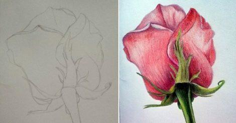 нарисовать розу