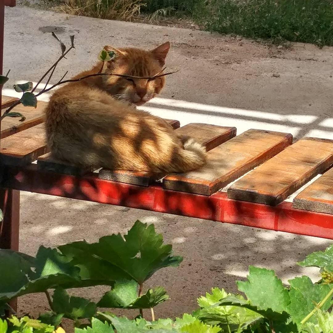 4. «Кот»
