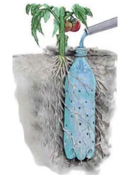При организации такой системы полива корни оплетут бутылку, будут забирать всю воду и её расход уменьшится