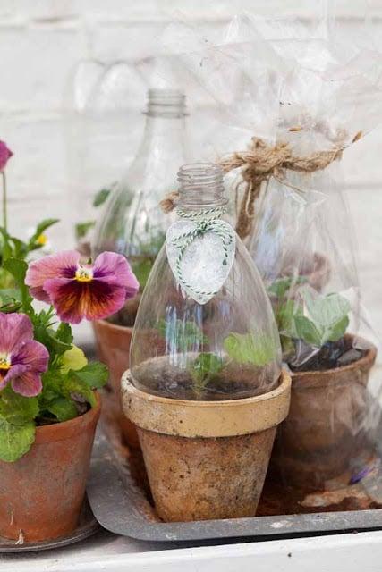 Пластик пропускает свет, но не воздух — чем не идея для мини-теплицы под один цветок?