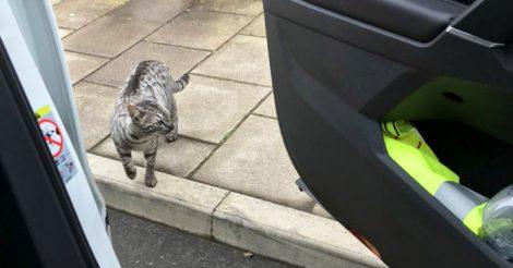 собственного кота