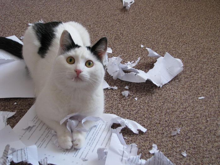 1. «Это была твоя домашняя работа?»