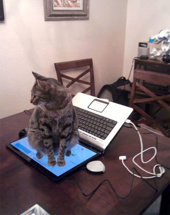 4. «Не сидеть на клавиатуре? Хорошо, хозяин»