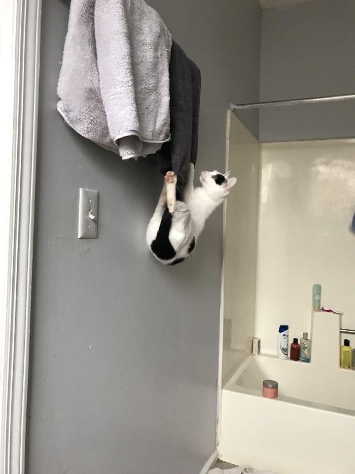 15. «Кошка считает, что полотенца должны лежать на полу»