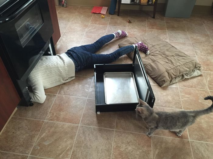 16. «Кошка заталкивает свою игрушку под плиту больше 5 раз в день, а потом мяукает, пока я её не достану»